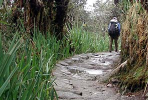 Trekking the Inca Trail to Machu Picchu with IMG