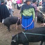 Otavalo Farmers Market. (Photo by Greg Vernovage)