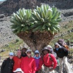 Kili team before Barranco. (Eben Reckord)