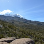 Looking up at Kili from about halfway between Machame Camp and Shira Camp. (Eben Reckord)