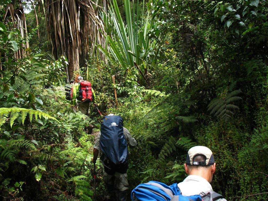 the jungle Trouvez les entreprises qui recrutent et qui vous correspondent sur welcome to the jungle toutes les entreprises sont présentées au travers de photos, vidéos, stastiques.