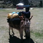 Loading the mules to go to Base Camp (Greg Vernovage)