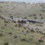 Wild Horses (Jenni Fogle)