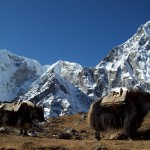 Best All Around. Everest Base Camp Trek. Photo by Clinton Winner.