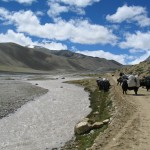 Yaks heading up road above Base Camp (Ang Jangbu)