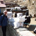 IMG sirdar Ang Pasang in Namche getting ready to load some yaks (Eric Simonson)