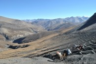 Heading for the pass with the mules  (Lobsang Sherpa)