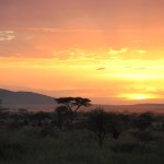Serengeti sunset. (Jenni Fogle)