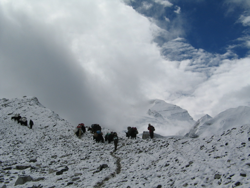 Yaks on way to ABC  (Ang Jangbu)