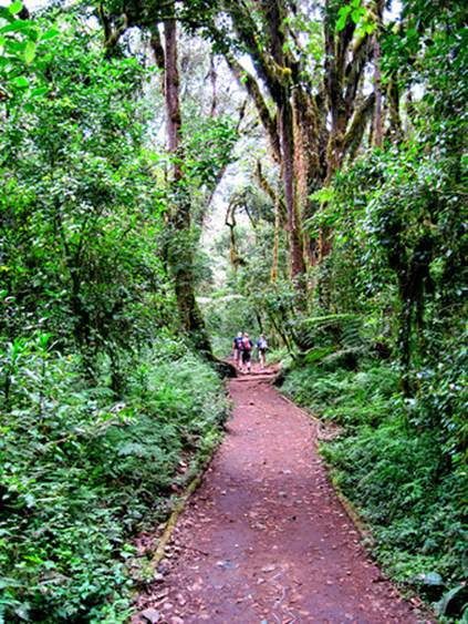 The trail to Machame Camp (Ken Maclaurin)