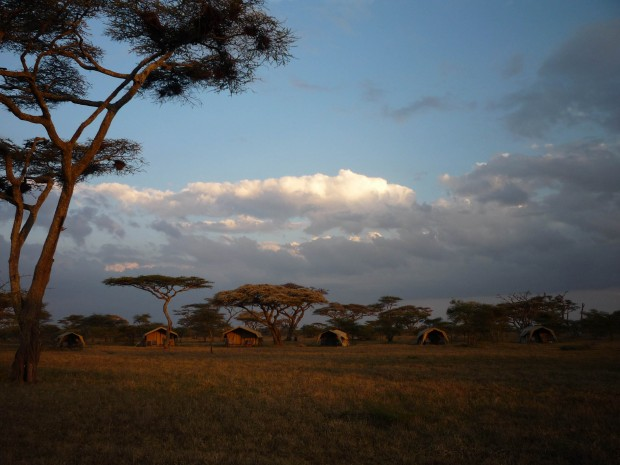 Beautiful nights on the Serengeti (Dustin Balderach)