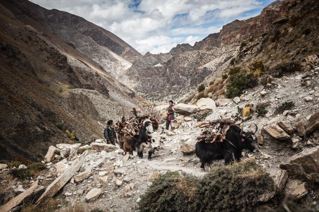 Trekking in Dolpo Region (Adam Angel)