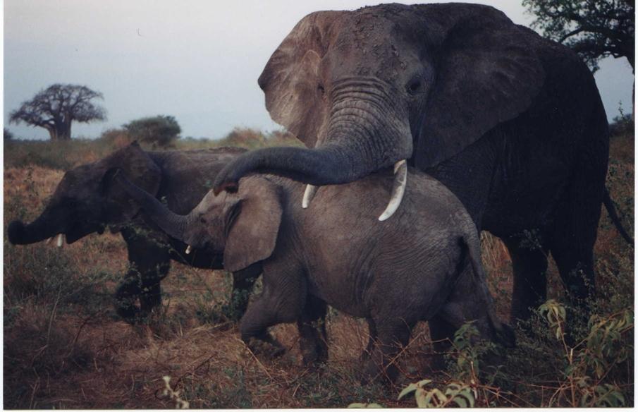 Featured safari subjects