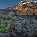Kilimanjaro (Adam Angel).