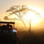 The Serengeti at sunset (Eben Reckord).