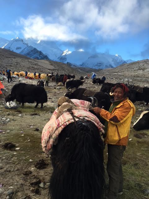 Yak and Tibetan Driver (Ang Jangbu)