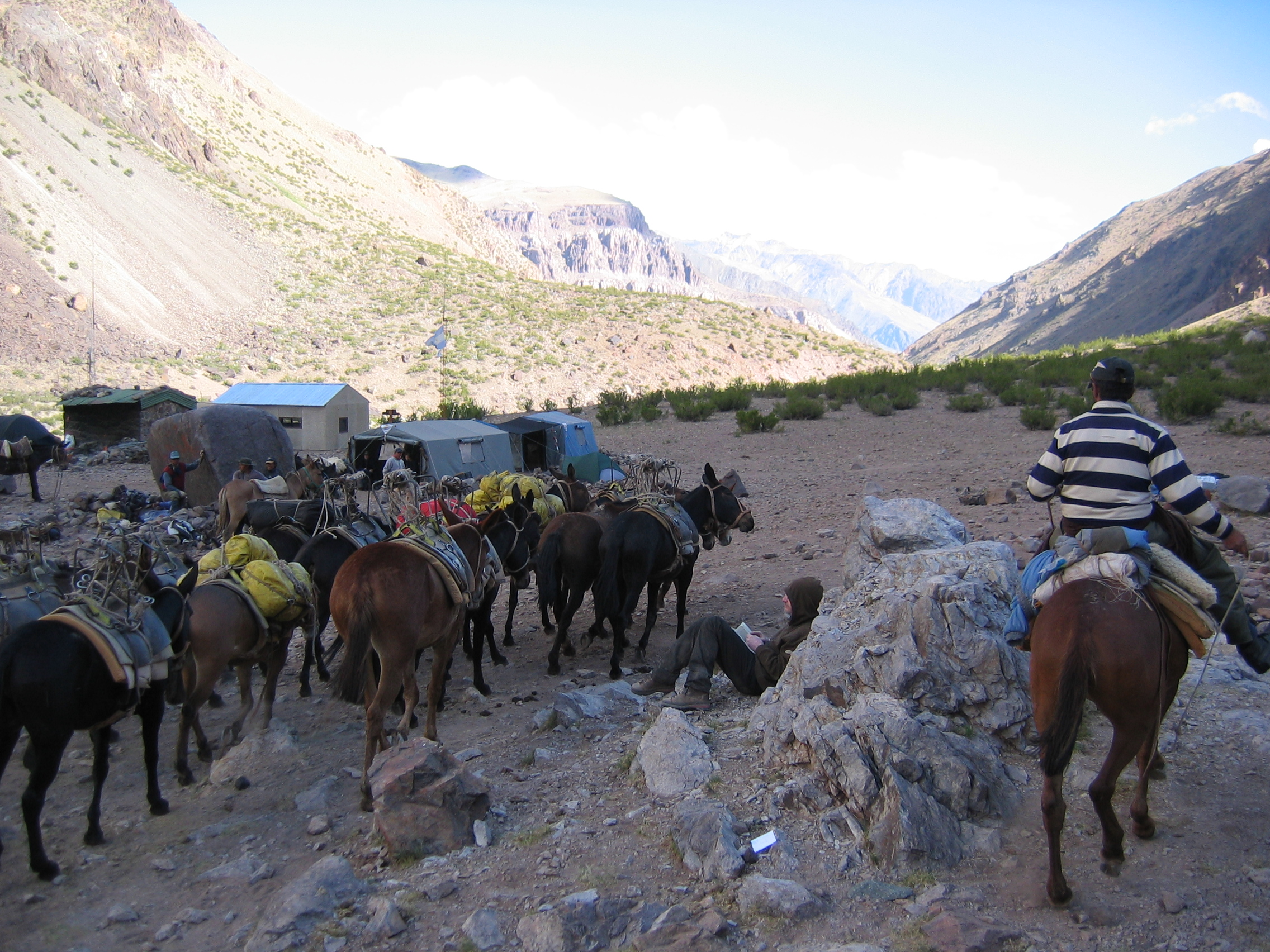 Mules pulling into Lenas