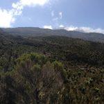 The Hike Up to the Shira Plateau (Dustin Balderach)