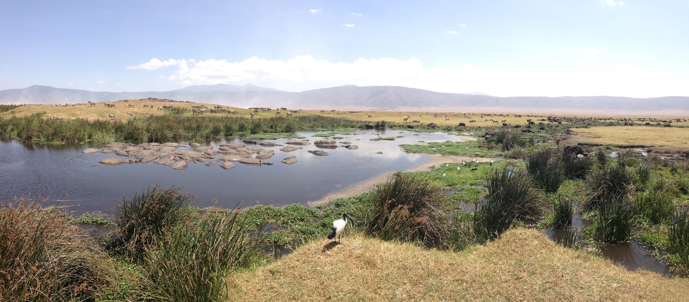 Wildlife in Ngorongoro Crater (Dustin Balderach)