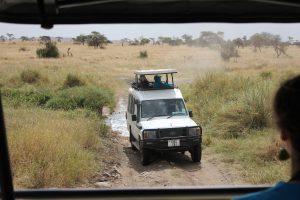 Game drive on the Serengeti (photo: Dustin Balderach)