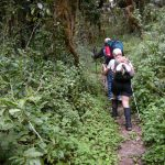 Hiking through the forest on the first day of the Kili climb (Eric Simonson)