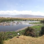 Wildlife galore in Ngorongoro Crater (Dustin Balderach)