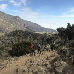 Giant Groundsel Trees near Barranco Camp (Dustin Balderach)