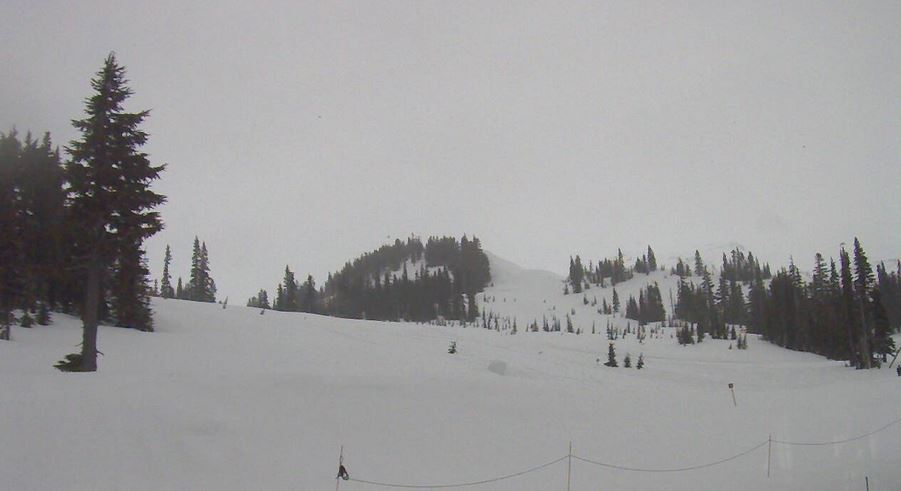 Paradise Webcam Screenshot (April 11, 2018)