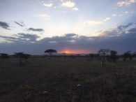 Sunset on the Serengeti (Dustin Balderach)