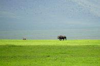 Rhino on the African Safari (Kate Kishfy)